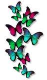 Vele verschillende vlinders Stock Foto