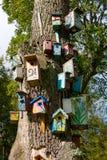 Vele verschillende vogelhuizen Royalty-vrije Stock Foto's