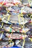 Vele verse krabben Stock Foto