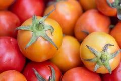 Vele verse tomaten voor het koken Stock Foto