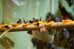 Vele vlinders Stock Afbeeldingen