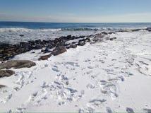 Vele voetafdrukken in de sneeuw stock afbeeldingen