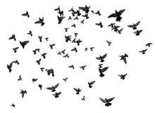 Vele vogels die in de hemel vliegen Stock Foto's