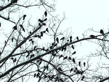 Vele vogels op de boom Royalty-vrije Stock Foto's