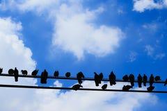 Vele vogels zijn op de lijn, Silhouet Stock Fotografie