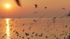 Vele zeemeeuwen die in de hemel en anderen vliegen die op het water bij de zonsondergang drijven stock videobeelden