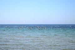 Vele zeemeeuwen het vliegen Royalty-vrije Stock Afbeelding