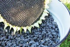 Vele zonnebloemzaden in de emmer Royalty-vrije Stock Foto