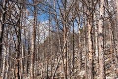 Velebit, Κροατία Στοκ εικόνα με δικαίωμα ελεύθερης χρήσης