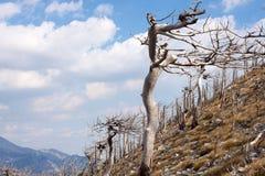 Velebit, Хорватия Стоковые Изображения RF