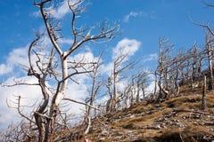 Velebit, Хорватия Стоковые Фото