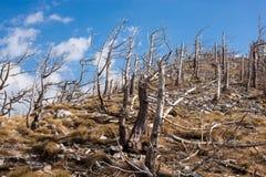 Velebit, Хорватия Стоковое фото RF