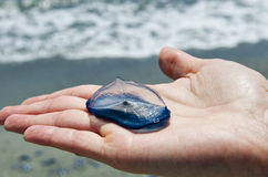 Velella placed on the one hand. On the bottom the shoreline Royalty Free Stock Photography