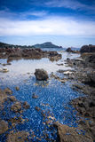 Velella Velella, γαλλικό Riviera, Γαλλία στοκ εικόνα με δικαίωμα ελεύθερης χρήσης