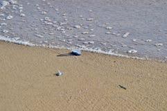 Velella Velella και αφρός θάλασσας Στοκ Φωτογραφίες