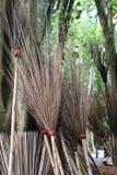 Velen bezems leunen boom Stock Afbeeldingen