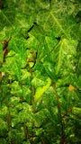 Velen doorbladeren met regendalingen Stock Afbeelding