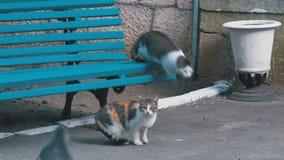 Velen dwalen katten zittend dichtbij een bank in het park af stock video