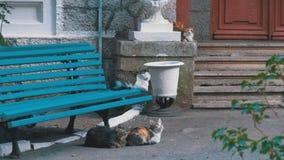 Velen dwalen katten zittend dichtbij een bank in het park af stock videobeelden