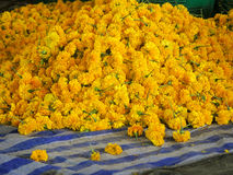 Velen gele mooie bloem Royalty-vrije Stock Fotografie