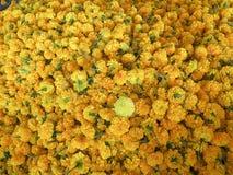 Velen gele mooie bloem Stock Afbeelding