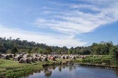 Velen het Kamperen Tent bij het Nationale Park van Khao Yai, Thailand Stock Foto's