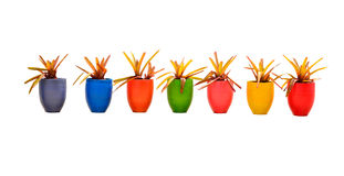 Velen kleuren jardiniere royalty-vrije stock afbeeldingen