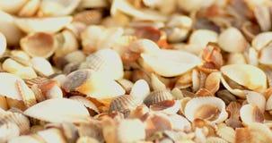 Velen leeg shells macroschot stock videobeelden