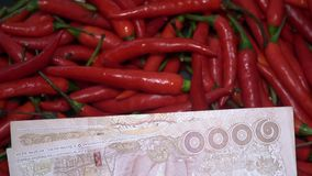Velen Rood Chili Peppers Rotating met Thais Nationale valutabaht stock footage