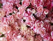 Velen roze bloem Royalty-vrije Stock Foto's