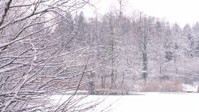 Velen sneeuwen behandelde sparren en eiken stock footage