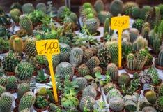 Velen, weinig, verschillende, leuke cactus, markt in Italië, Reggio Em Royalty-vrije Stock Afbeelding