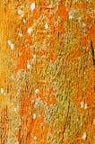 Velho, caverna da árvore do grunge usada como o fundo Foto de Stock