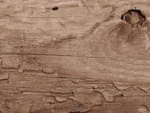 Velho crecked a placa de madeira comida por sem-fins e por besouros na cor do sepia foto de stock royalty free