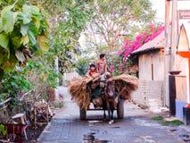 Velho Mundo no mundo novo, meninos que usam seus cavalo e carro Foto de Stock
