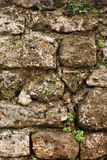 Velho stonewall com plantas fotos de stock