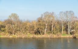 Velika摩拉瓦河大摩拉瓦在有树和草的塞尔维亚在岸 免版税库存图片