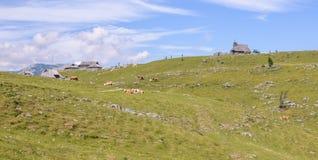 Velika planina高原,斯洛文尼亚,山村在阿尔卑斯,传统风格的,普遍远足木房子 免版税图库摄影