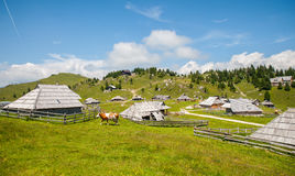 Velika Planina kulle, Slovenien Royaltyfri Fotografi