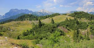 Velika planina meadow vegetation, Slovenia Stock Photo