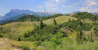 Velika planina meadow vegetation, Slovenia. Velika planina alpine meadow vegetation, Kamnik and Savinja Alps, Slovenia Stock Photo