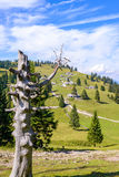 Velika planina plateau, Slovenia, Mountain village in Alps, wooden houses in traditional style, popular hiking Royalty Free Stock Photos