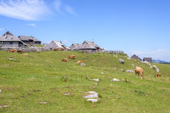 Velika planina plateau, Slovenia, Mountain village in Alps, wooden houses in traditional style, popular hiking Royalty Free Stock Photography