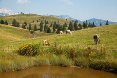 Velika planina, Slovenia Royalty Free Stock Photography