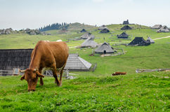 Velika Planina, Slovenia Stock Photos