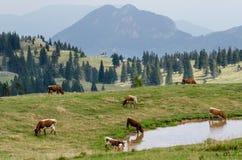 Velika Planina, Slovenia Stock Photography
