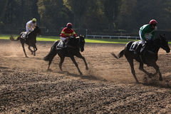 Velka Pardubicka Steeplechase in Pardubice, Czech Republic. Royalty Free Stock Images
