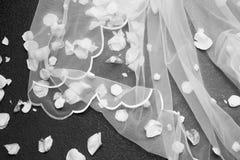 Velo de la novia Imagen de archivo
