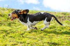 Velocidad completa del perro de afloramiento Foto de archivo libre de regalías
