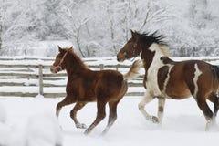 Velocidad de un caballo en un galope cuando invierno imagenes de archivo